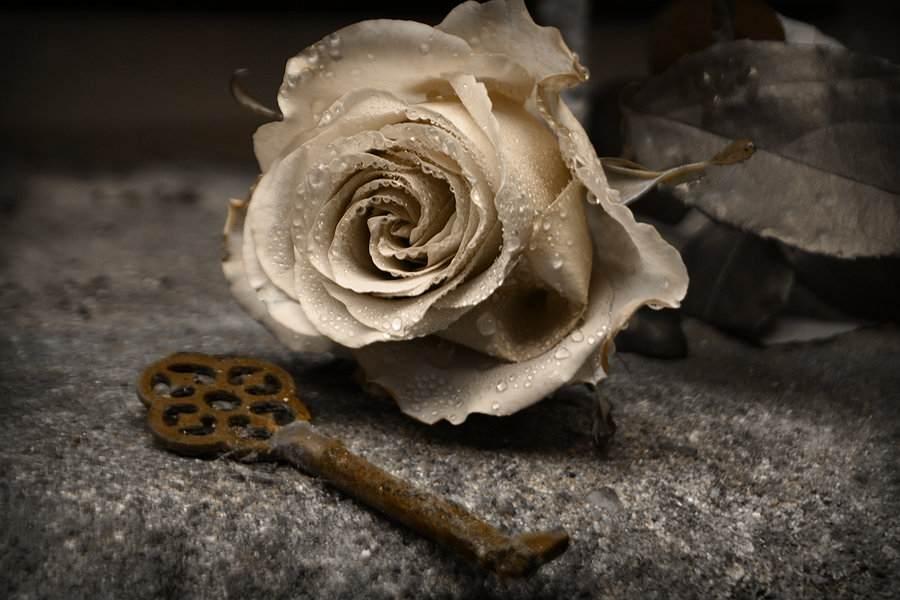 golden_rose_by_amy_heartbreak-d2y8jzj